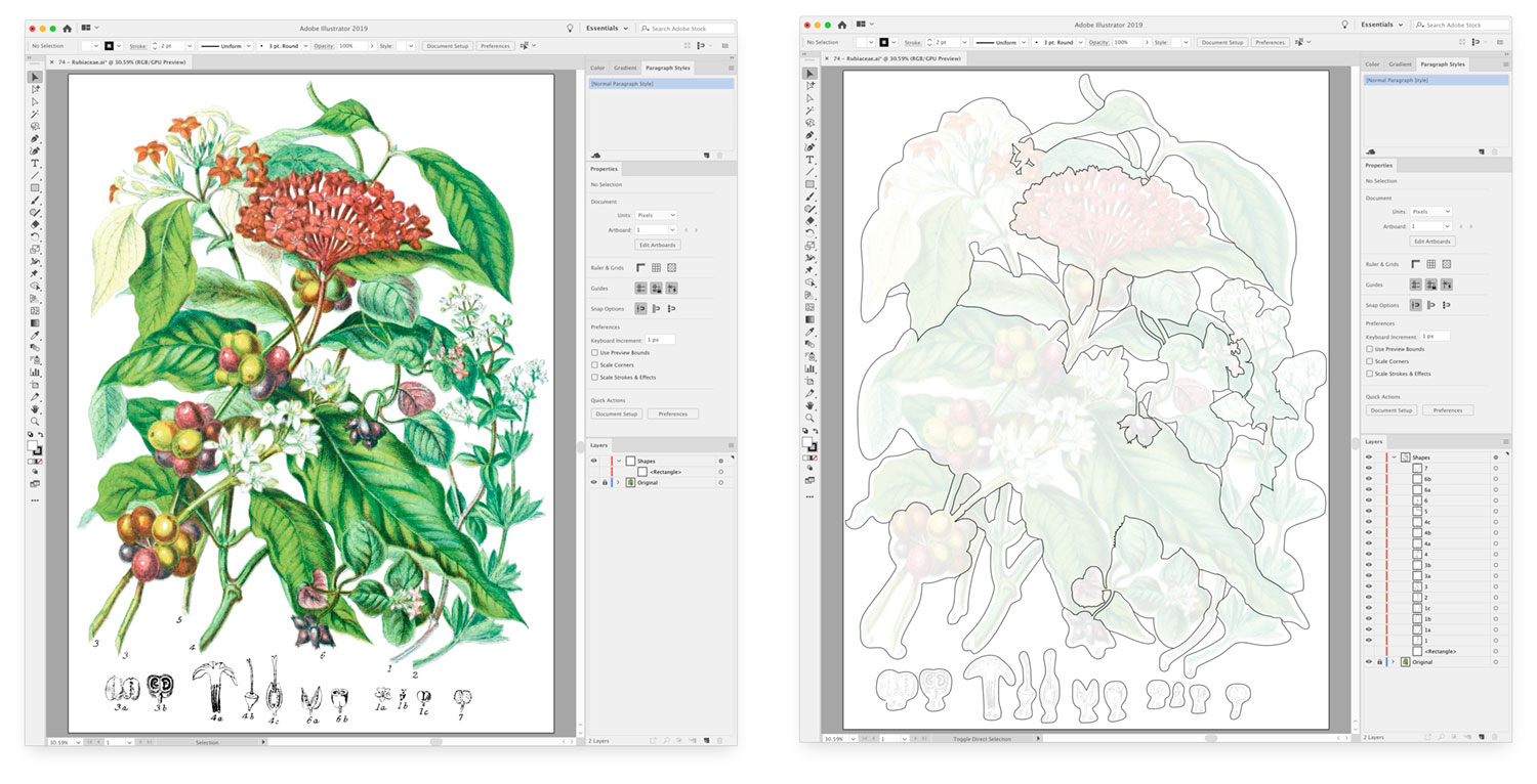 Screenshots of before and after outlining plants in the madder tribe